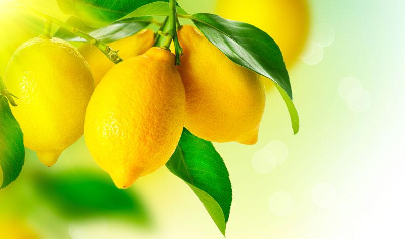 Citrusi ubrzavaju metabolizam